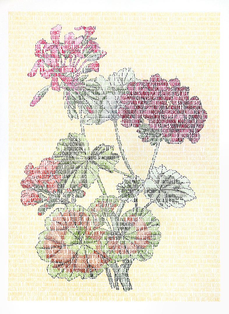 Bouziane Geraniaceae. Lápices de colores sobre papel. 87x67cm.