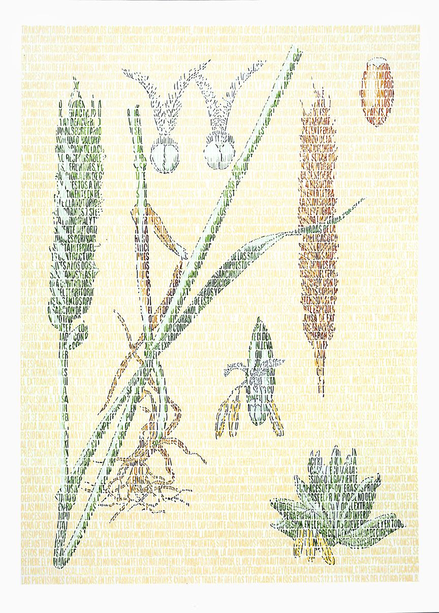 Laslo Poaceae. Lápices de colores sobre papel. 87x67cm.
